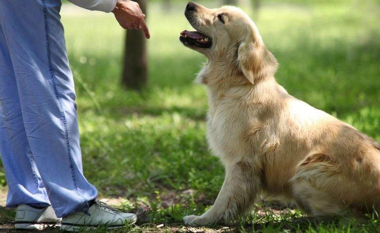Curso de educación y adiestramiento para perros