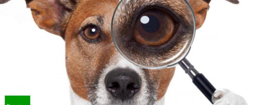 Residencias caninas y guarderías de mascotas