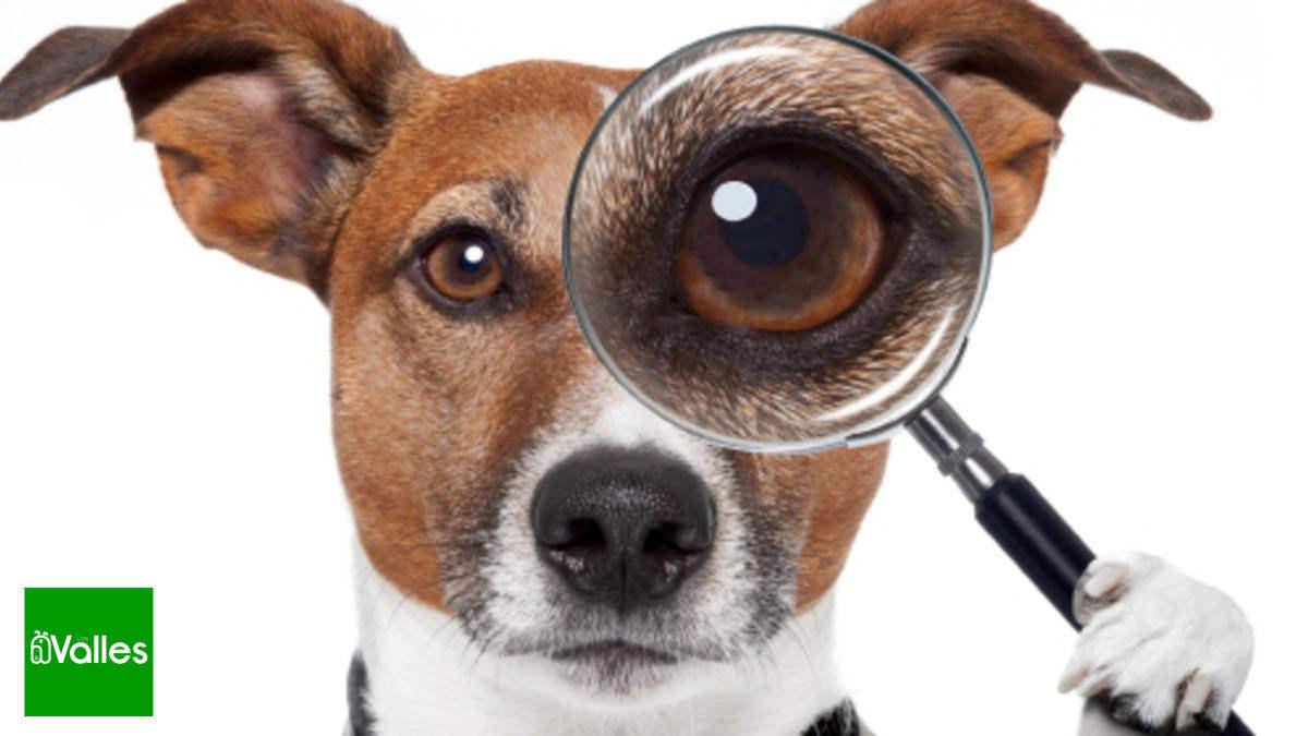 elegir residencia canina
