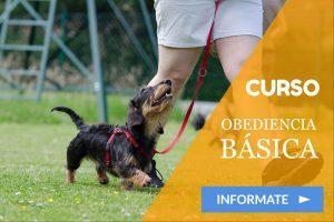 curso adiestramiento canino valladolid