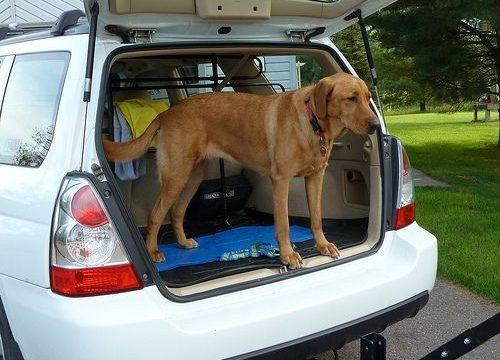 Viajar a sitios que aceptan mascotas